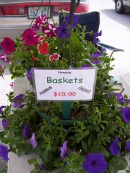 A Petunia basket we sold at Farmers Market
